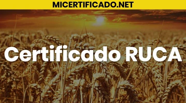 Certificado RUCA